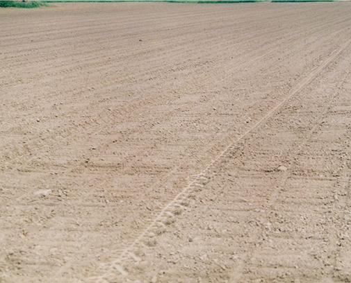 Фото 8. Вид поля после сева ширицы