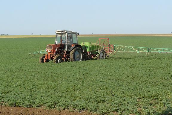 Фото 2. Практики о выращивании нута