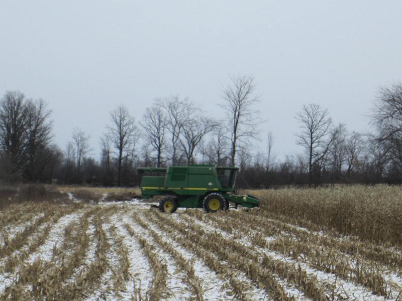 Фото 4. Уборка кукурузы зимой. Снимок сделан в Канаде, 8 декабря 2010 года