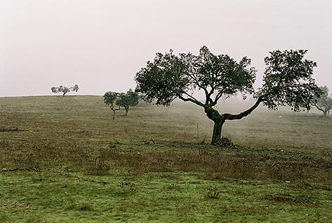 Последние деревья в борьбе за выживания