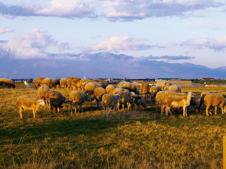 Причина эрозии почвы - чрезмерный выпас