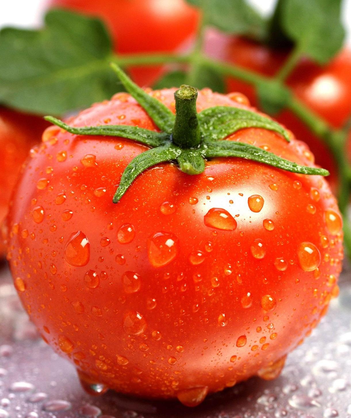 Генно-модифицированные помидоры из США