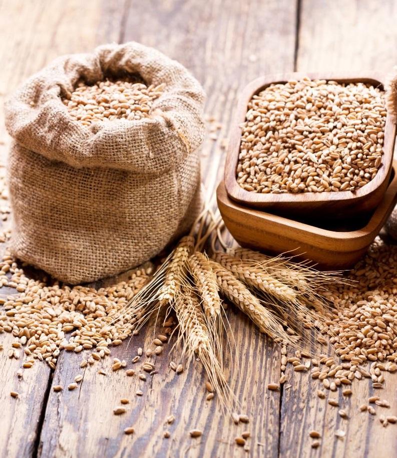 Программа закупки зерна — экономия и продовольственная безопасность