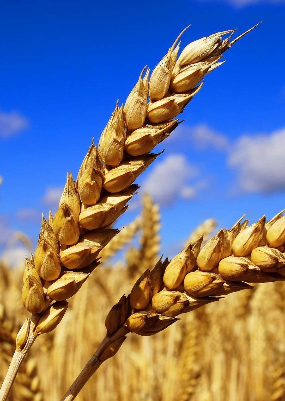 В Украине увеличился экспорт аграрной продукции