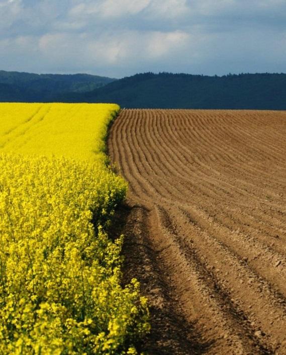 Земельный ресурс: только аргументы, только цифры