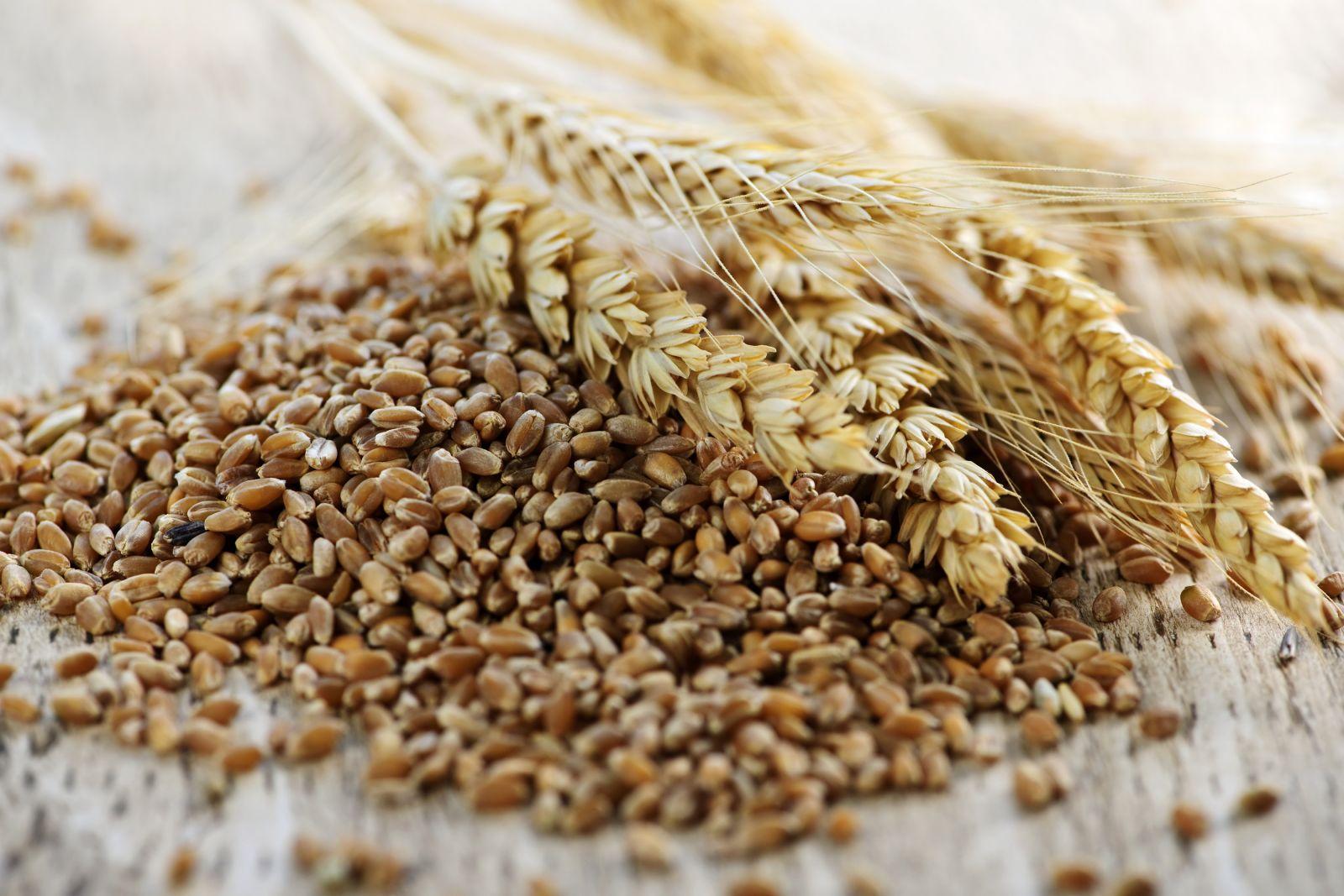 Экспорт зерновых изУкраины перевалил за21 млн тонн