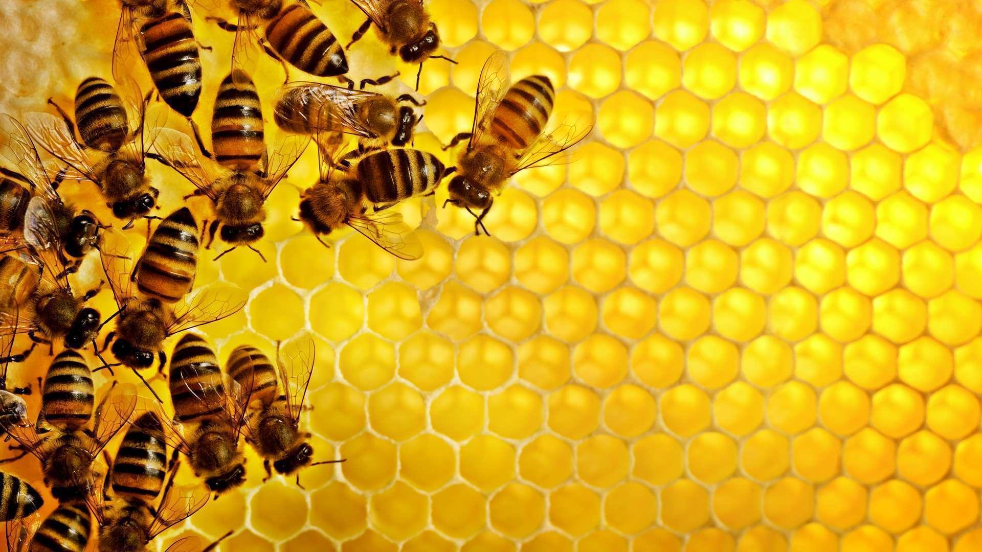 Фото 1. Липовый мед