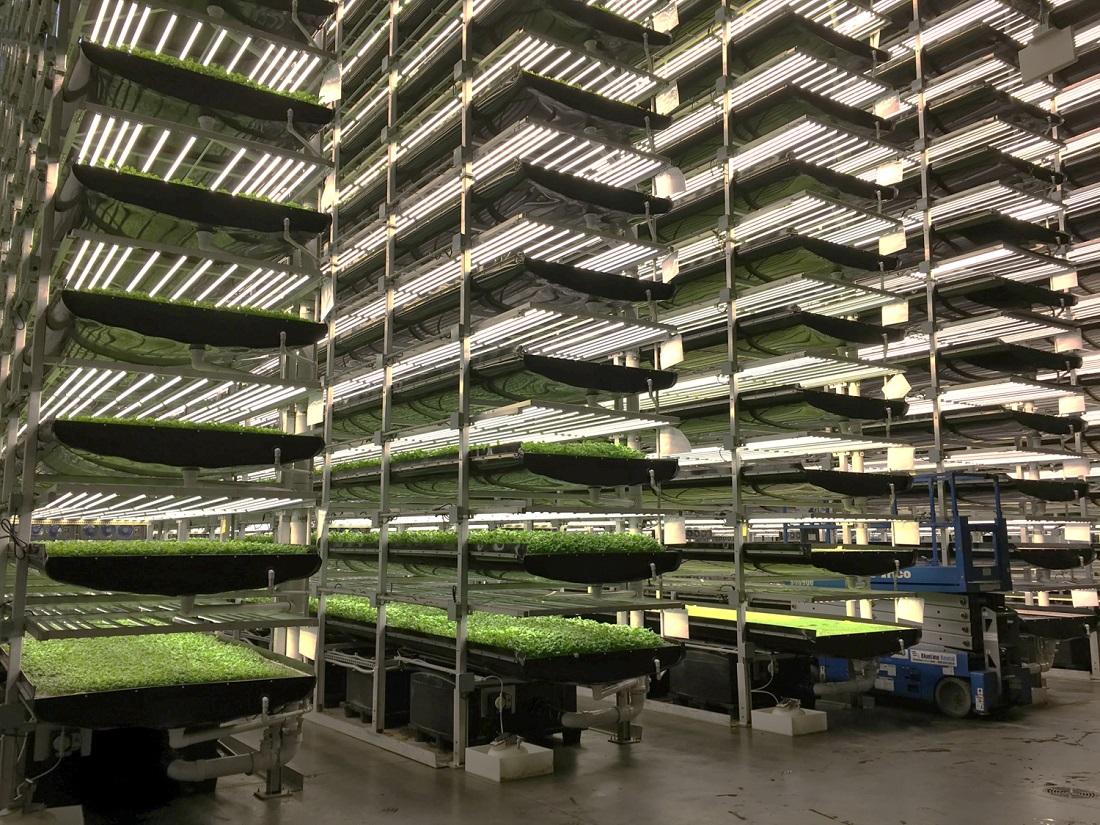 В Дубае появилась первая вертикальная ферма