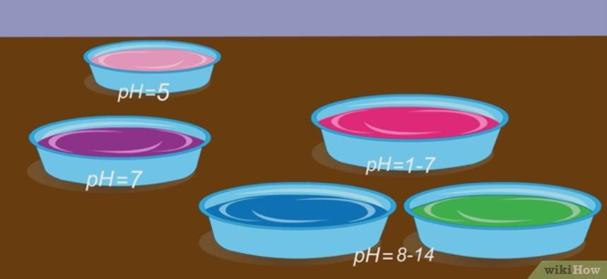 Фото 12. WikiHow: Как определить кислотность почвы подручными средствами