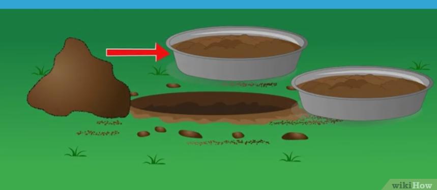 Фото 13. WikiHow: Как определить кислотность почвы подручными средствами