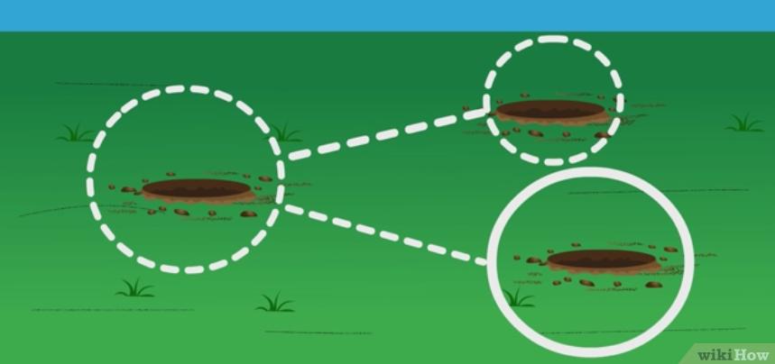 Фото 5. WikiHow: Как определить кислотность почвы подручными средствами