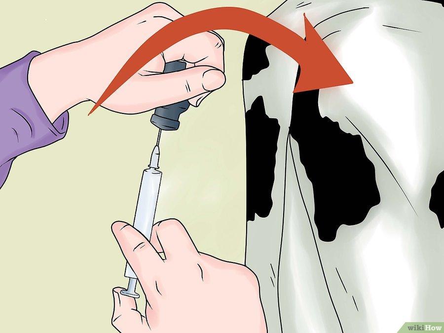 Фото 3. WikiHow: Как делать уколы крупному рогатому скоту