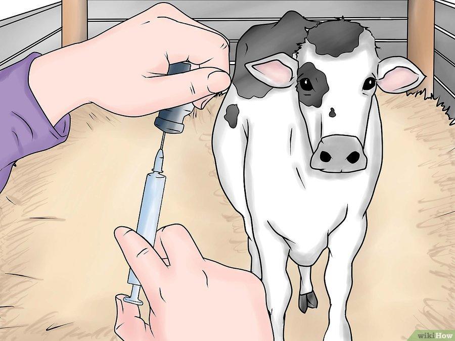 Фото 7. WikiHow: Как делать уколы крупному рогатому скоту