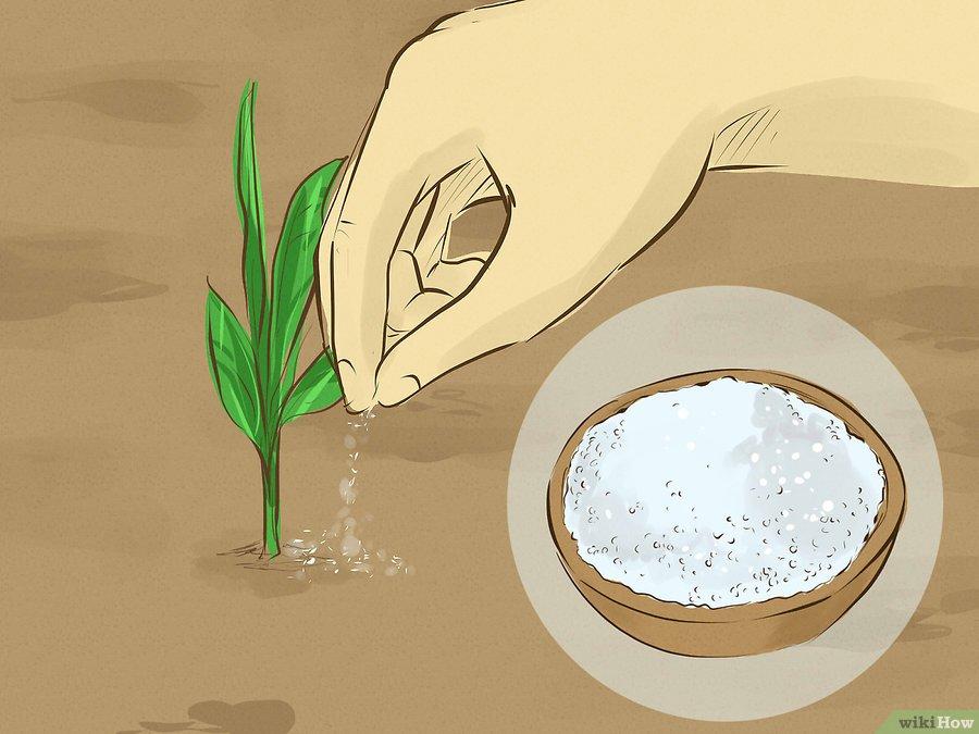 Фото 9. WikiHow: Как сделать удобрение своими руками (ГРАФИКА)