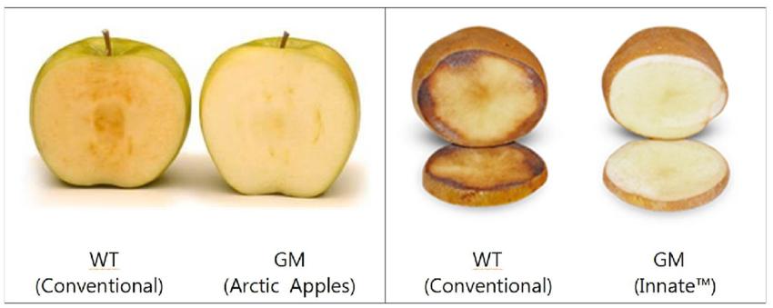 Фото 1. Полезные ГМО-продукты — не миф, а реальность! (ФОТО)