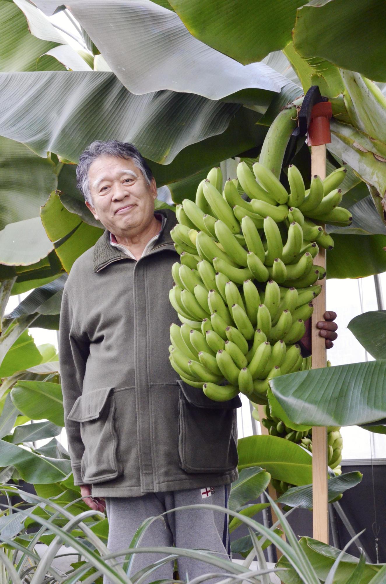 Фото 1. В Японии вывели морозоустойчивые бананы