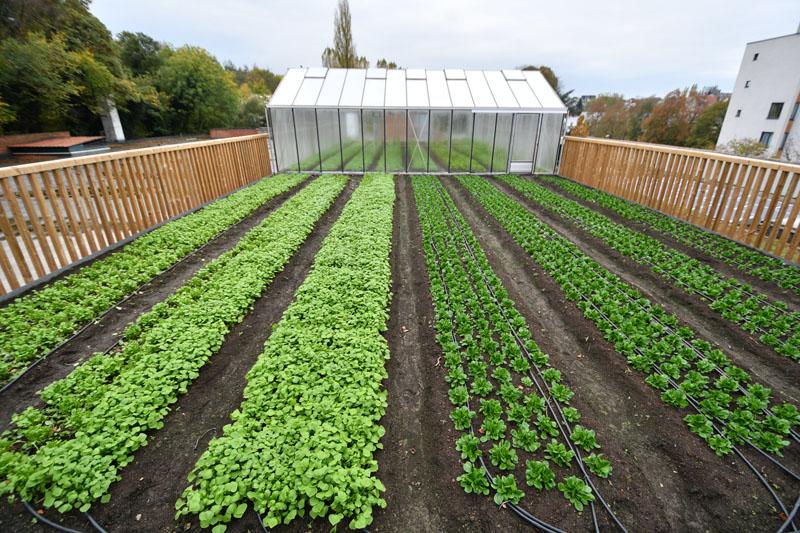 Фото 1. Брюссельский супермаркет выращивает овощи на крыше (ФОТО)