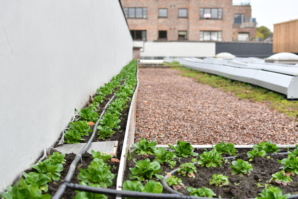 Фото 2. Брюссельский супермаркет выращивает овощи на крыше (ФОТО)