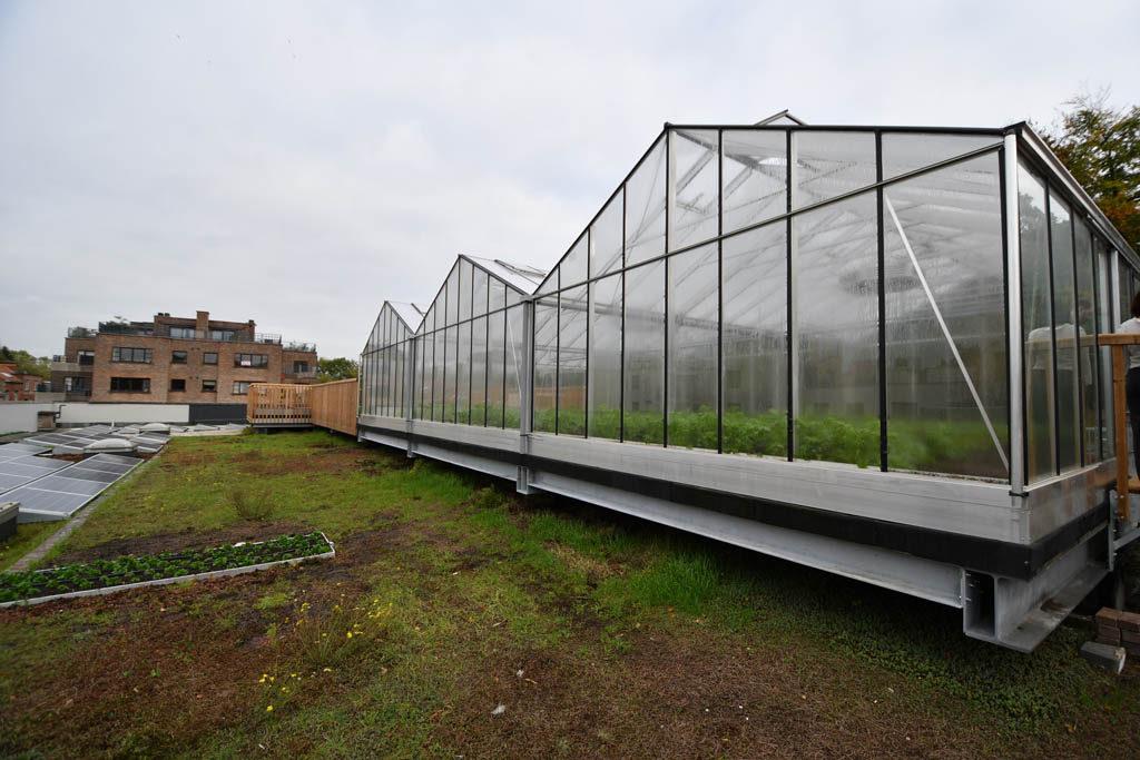 Фото 3. Брюссельский супермаркет выращивает овощи на крыше (ФОТО)