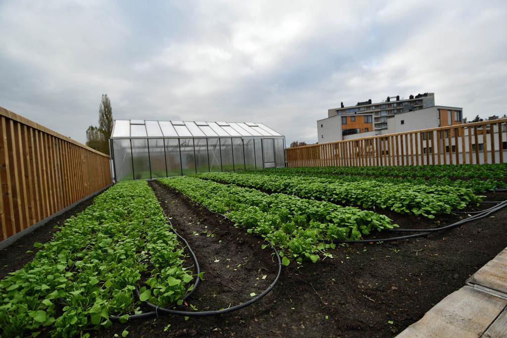 Фото 4. Брюссельский супермаркет выращивает овощи на крыше (ФОТО)
