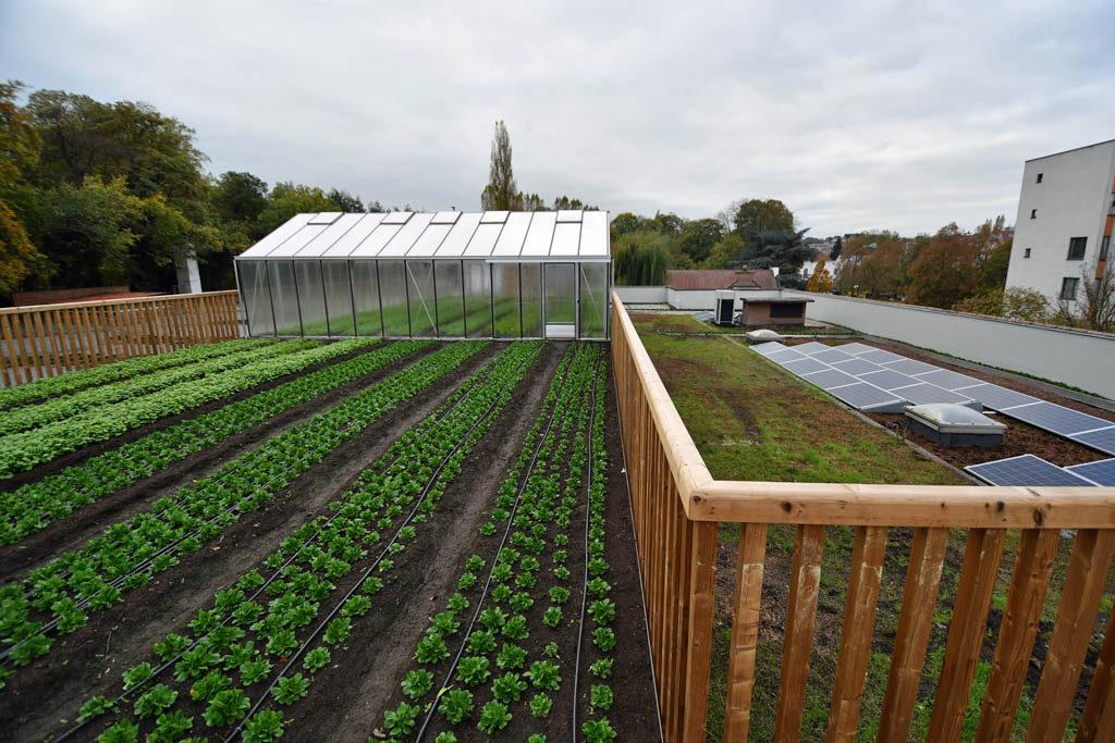 Фото 5. Брюссельский супермаркет выращивает овощи на крыше (ФОТО)