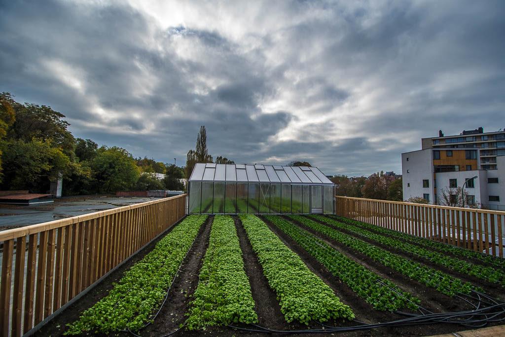 Фото 6. Брюссельский супермаркет выращивает овощи на крыше (ФОТО)