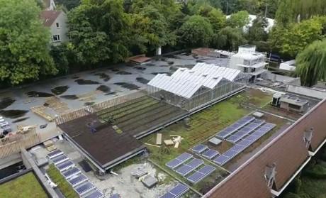 Фото 8. Брюссельский супермаркет выращивает овощи на крыше (ФОТО)