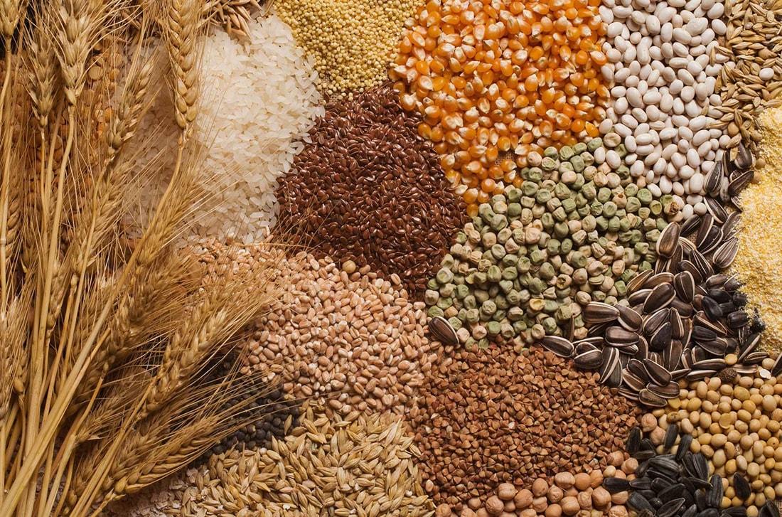 Giá lúa mì Nga duy trì vững do nguồn cung giảm