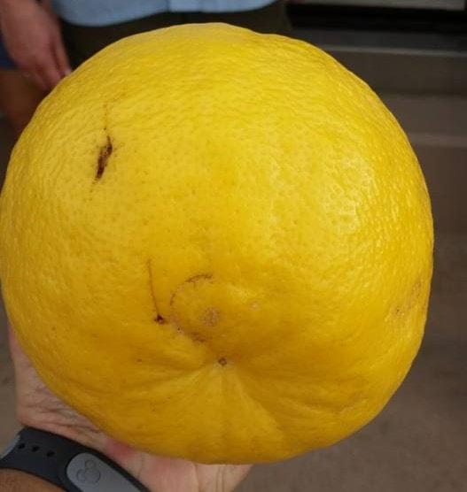 Фото 5. В Disney World выращивают гигантские овощи и фрукты (ФОТО, ВИДЕО)