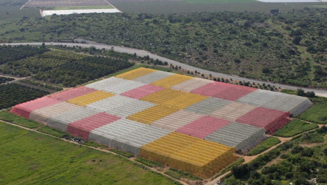 Фото 1. Разноцветные теплицы самостоятельно уничтожают вредителей