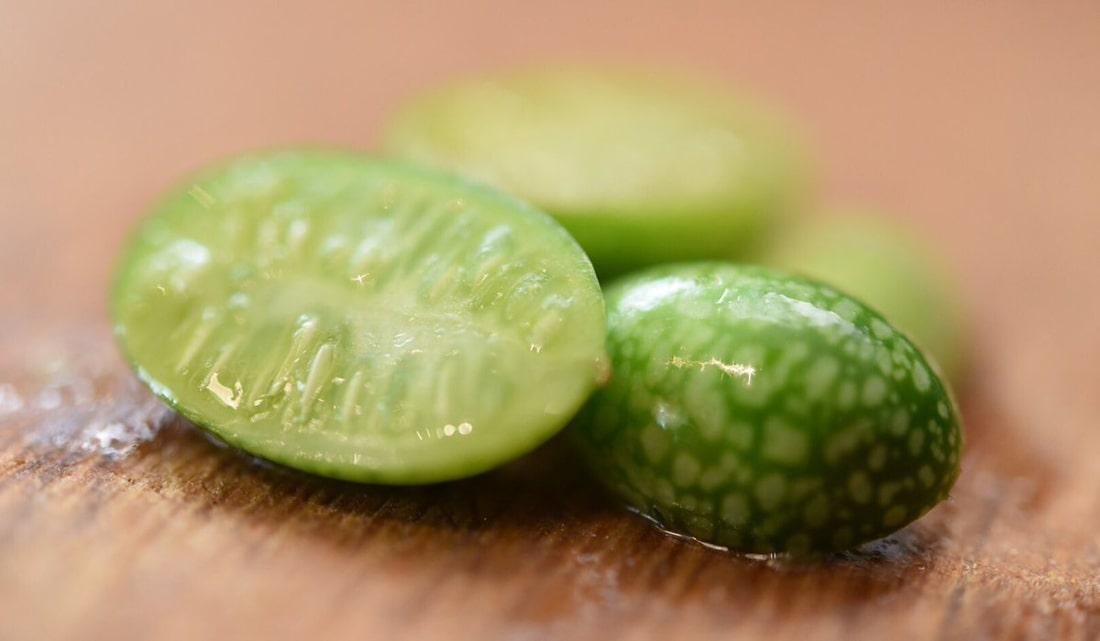 Фото 1. В Турции выращивают самые крошечные в мире арбузы (ФОТО)