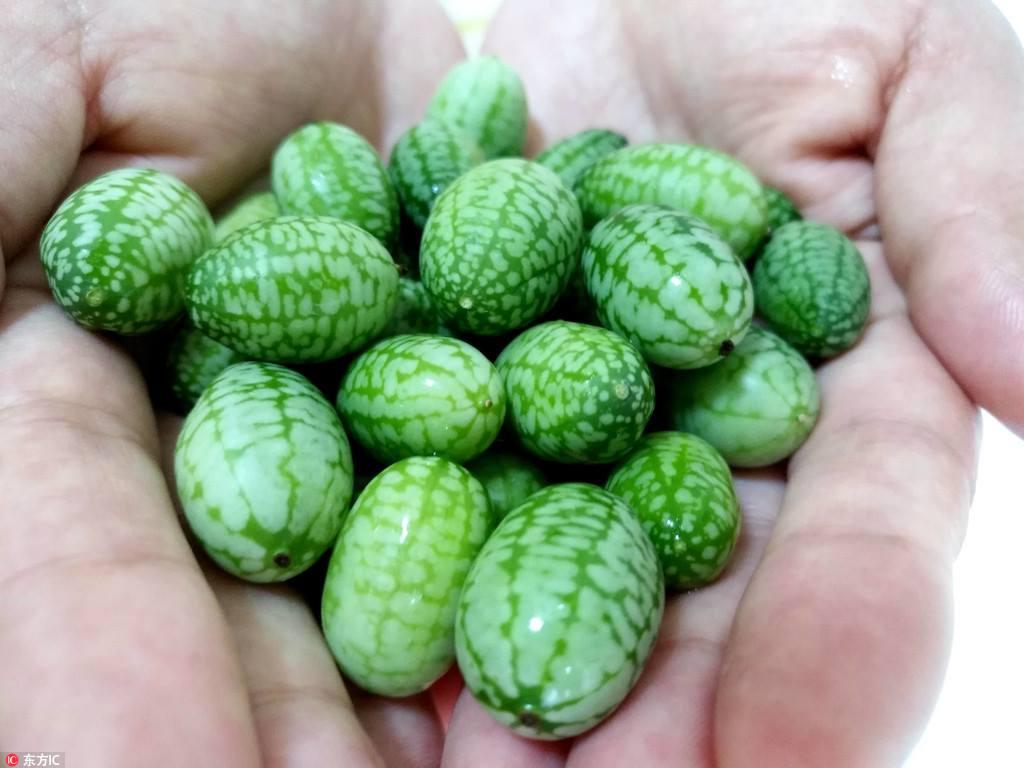 Фото 2. В Турции выращивают самые крошечные в мире арбузы (ФОТО)
