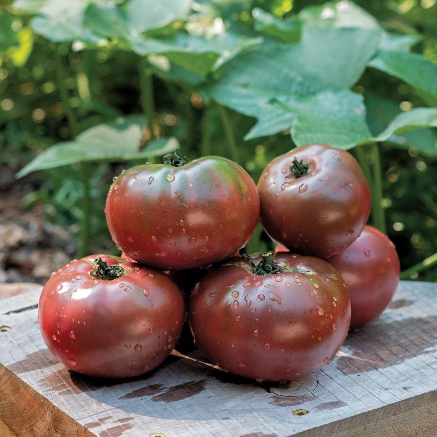 Фото 1. В США вывели фиолетовые помидоры