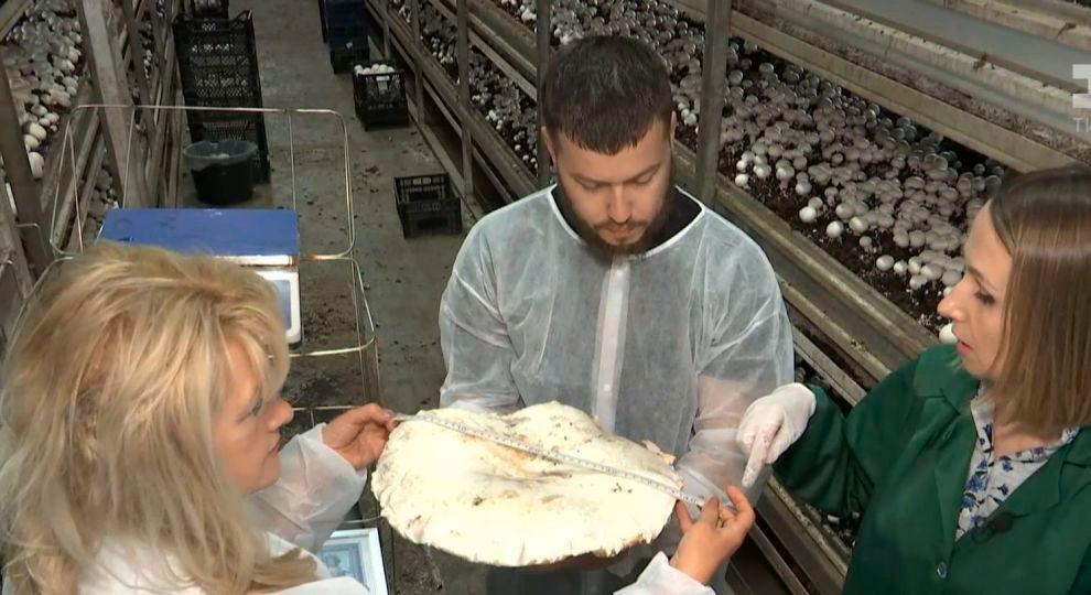 Фото 1. Самые большие грибы (ФОТО)