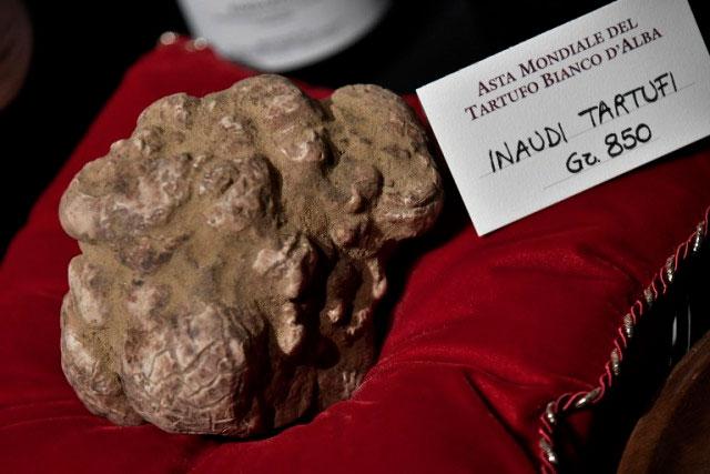 Фото 8. Самые большие грибы (ФОТО)