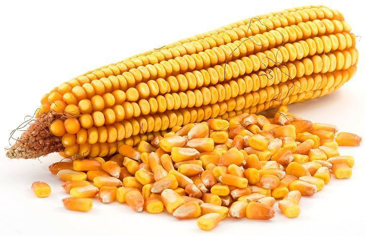 Сушить кукурузу или пусть сохнет сама?