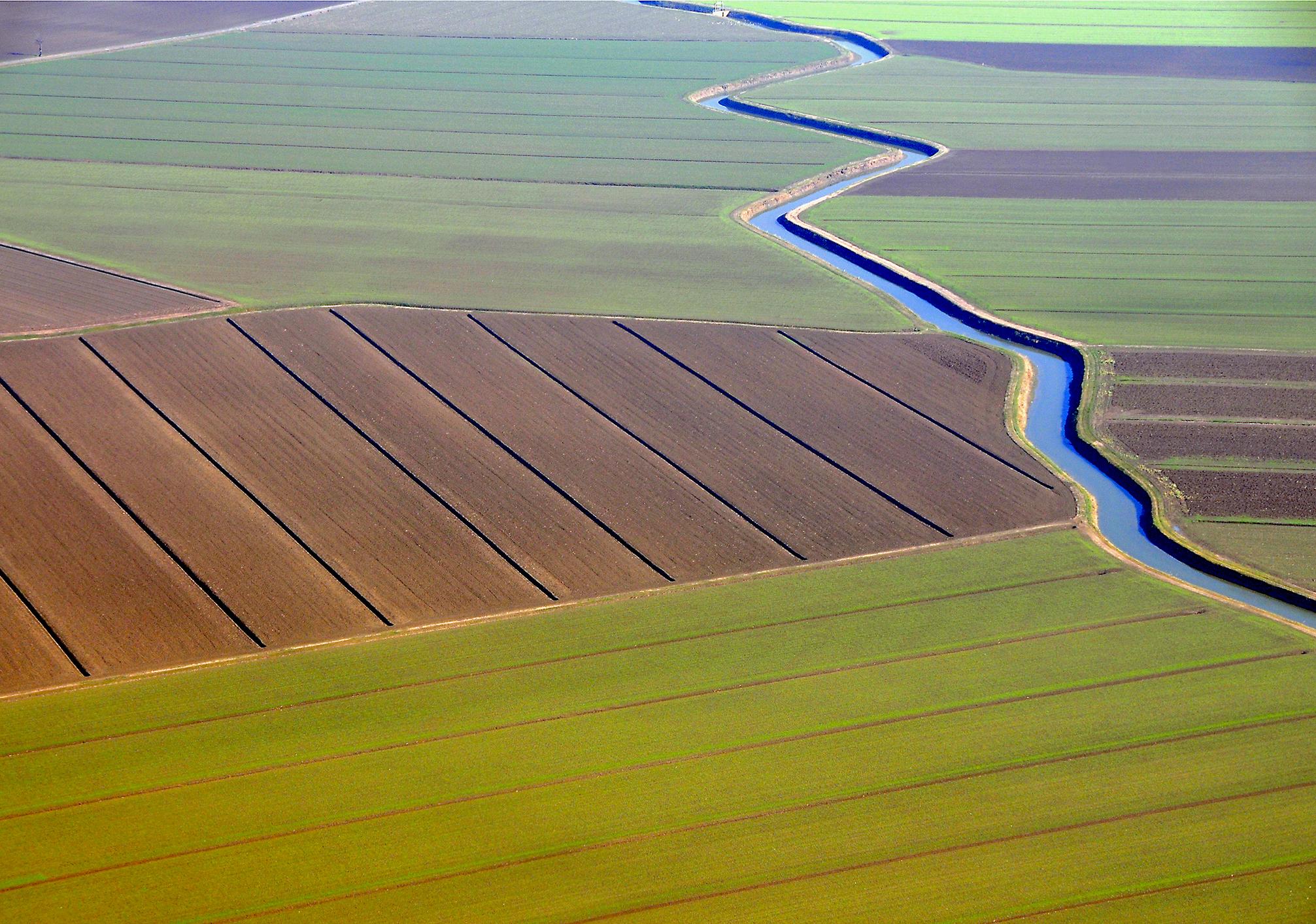 5 вариантов развития рынка сельхозземель в Украине