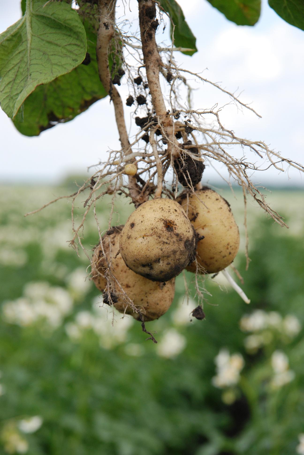 ГМО естественного происхождения