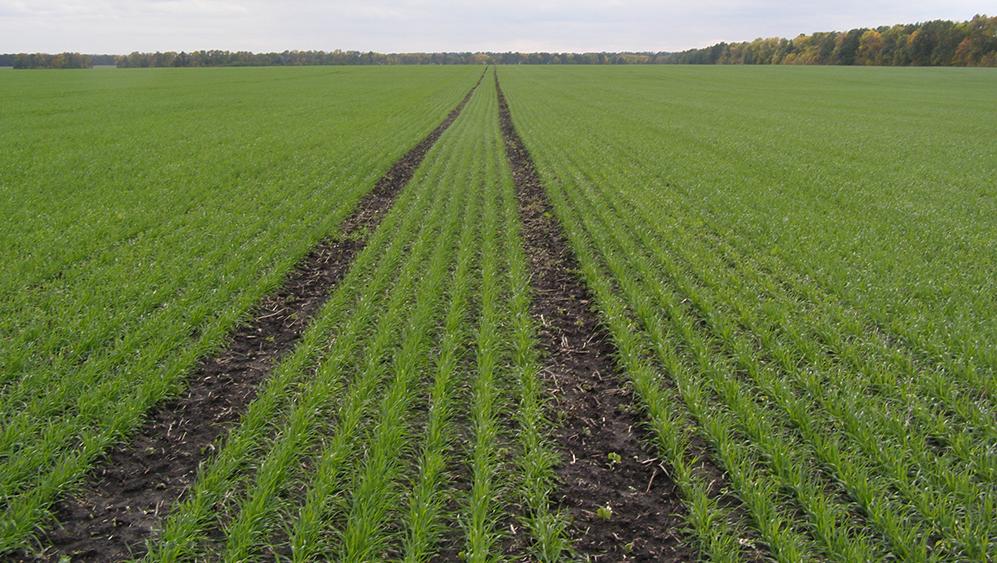 О роли предшественников и способов обработки почвы