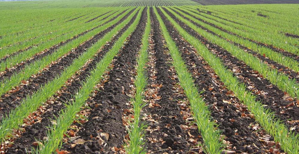 Минеральное питание растений. Cекреты урожайности от К. Цуркана («Компания «РАЙЗ»)