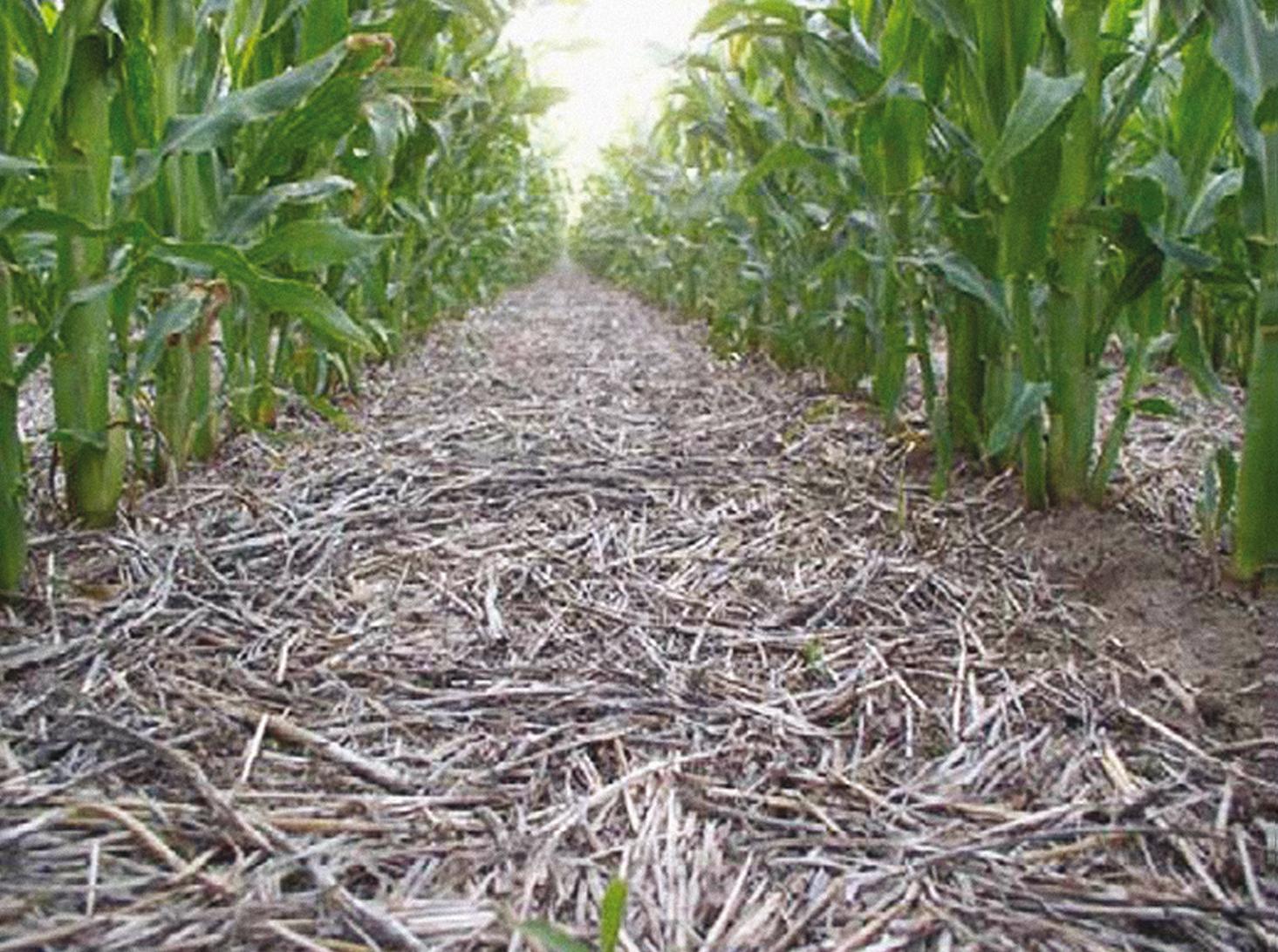 No-till. Улучшение функционирования почвы и сохранение влаги