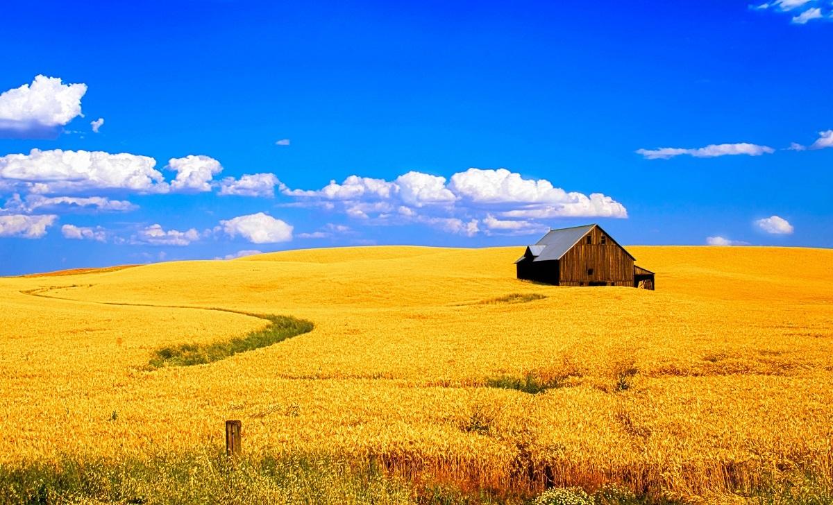Сельскохозяйственный бизнес – с чего начать?