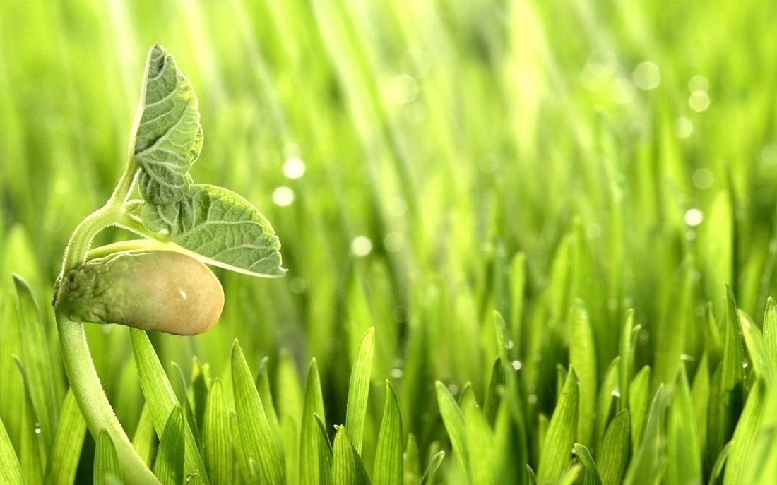 Біостимулятори «Фертігрейн» – надійний захист урожаю!