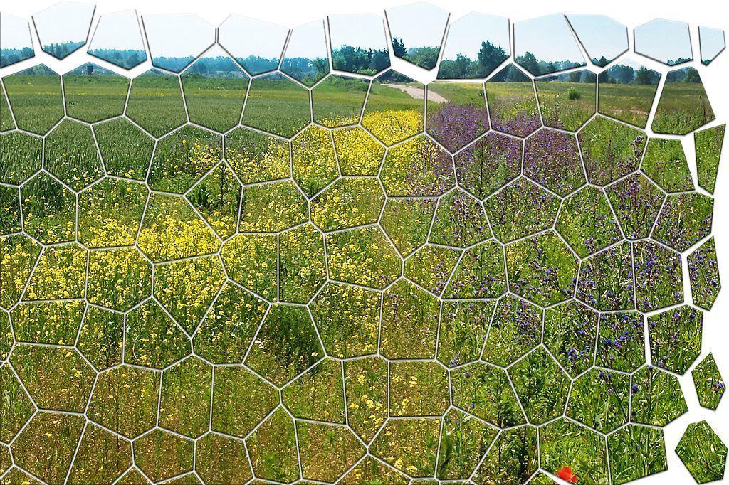 Мозаика сорняков и три подхода к управлению сорняками