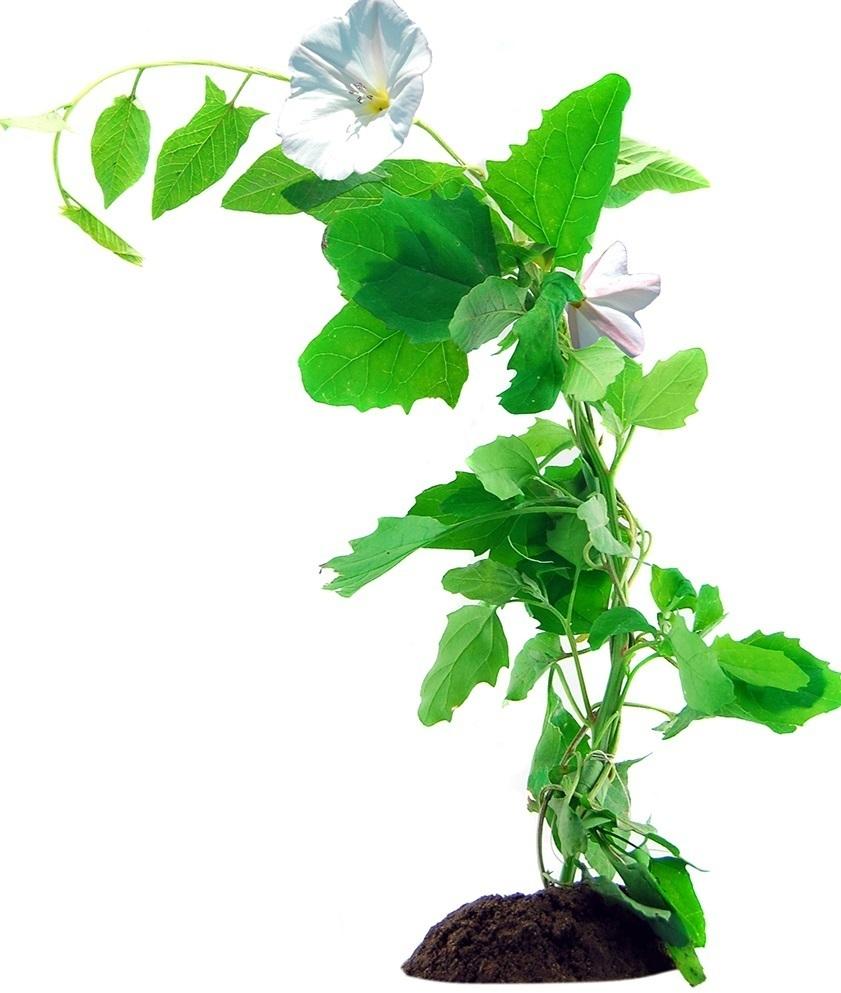 Переход к экологическому управлению сорняками