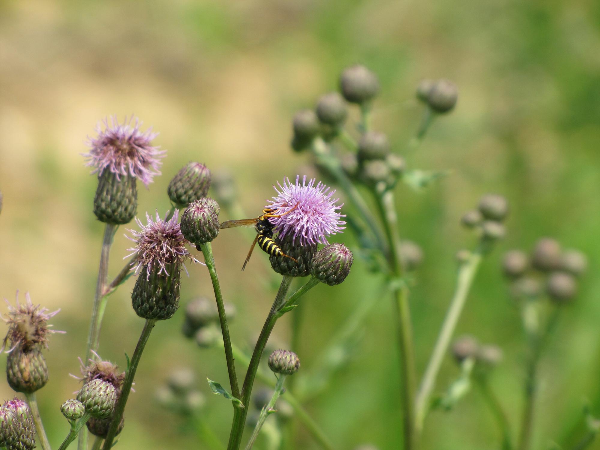 Сорняки. Научные основы экологического контроля