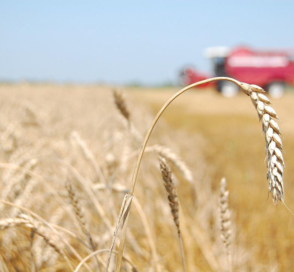 От чего зависит качество посевного материала и Как избежать травмирования семян