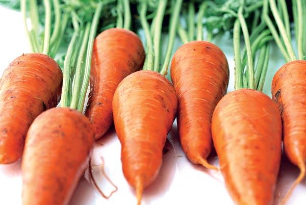 Боремся с потерями урожая моркови