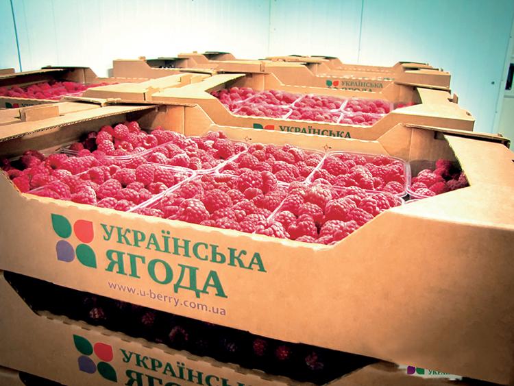 Тарас Баштанник, руководитель ООО «Украинская ягода»: Малиновый запах прибыли