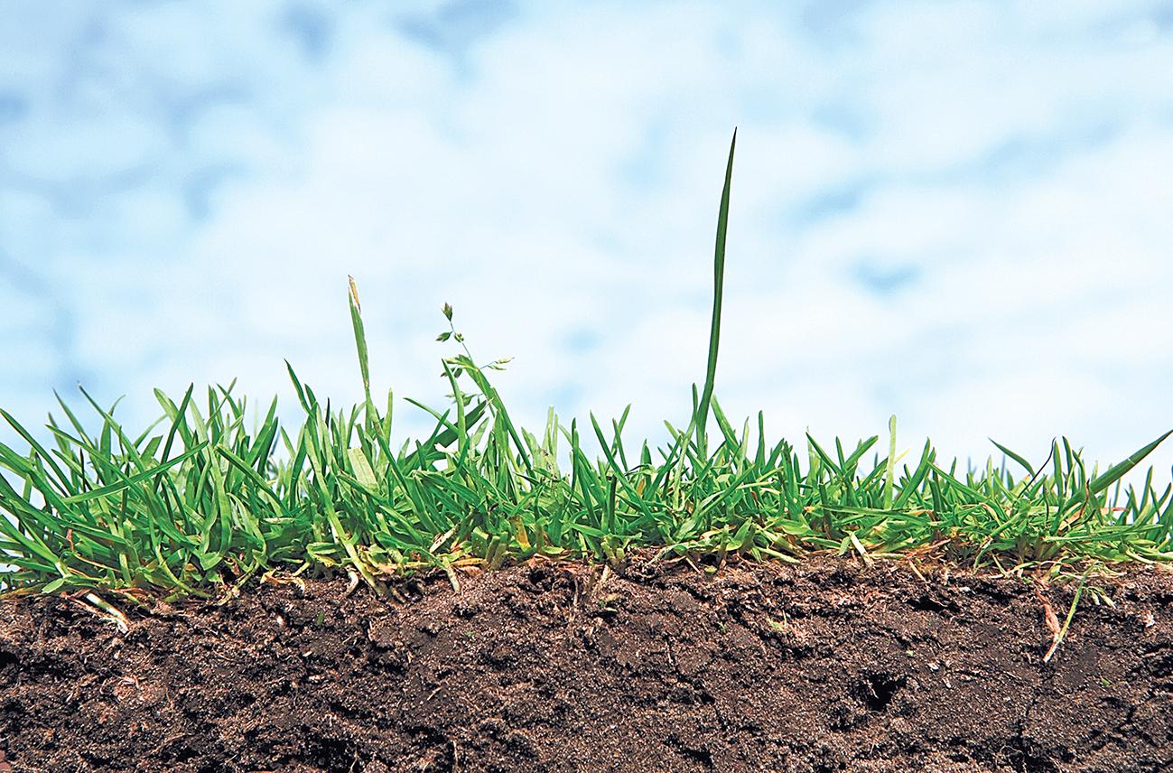 Настоящая живая почва. Экология ризосферы